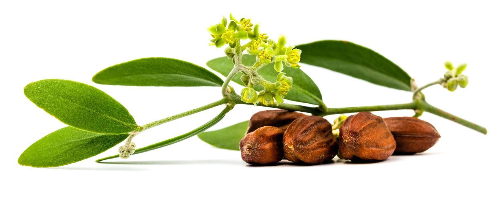 cosmétiques et produits de beauté de la mer mortea l'huile de jojoba
