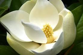 cosmétiques et produits de beauté de la mer morte au magnolia